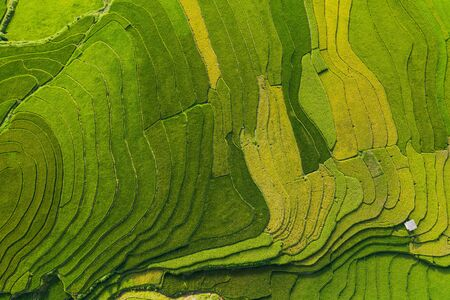 Aerial top view of paddy rice terraces, green agricultural fields in countryside or rural area of Mu Cang Chai, Yen Bai, mountain hills valley at sunset in Asia, Vietnam. Nature landscape background.