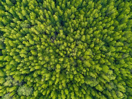Aerial top view of lush green trees from above in tropical forest in national park and mountain or hill in summer season in Thailand. Natural landscape. Pattern texture background. 写真素材