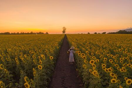 An Asian woman enjoying and relaxing in a full bloom sunflower field with road corridor during travel holidays vacation trip outdoors at natural garden park at sunset in Lopburi, Thailand. Lifestyle.