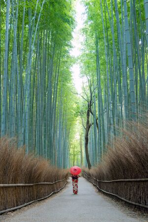 An Asian woman wearing Japanese traditional kimono standing in Bamboo Forest during travel holidays vacation trip outdoors in Kyoto, Japan. Tall trees in natural park. Nature landscape background. Stok Fotoğraf
