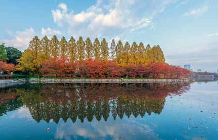 Lake or river reflection of red maple leaves or fall foliage with branches in colorful autumn season in Kyoto City, Kansai. Trees in Japan. Nature landscape background. 스톡 콘텐츠