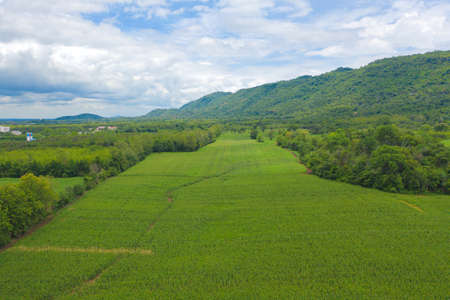 Aerial top view of grass and crops field with green Mountain hill in agriculture concept. Nature landscape background in Thailand. Banco de Imagens