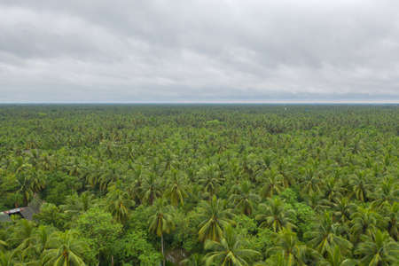 Aerial view of coconut or palm trees. Nature landscape forest background in agriculture farm concept, Ratchaburi, Thailand. Food crops. Banco de Imagens