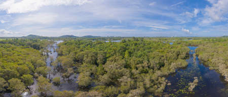 Aerial view of trees in Rayong Botanical Garden, Old Paper Bark Forest, tropical forest with lake or river in national park and mountain or hill in Thailand. Natural landscape background.