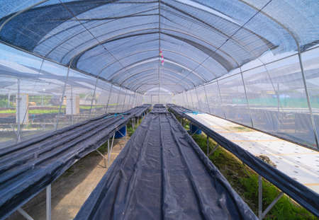 Row of fresh vegetable salad garden plant industry farm in argricuture concept. Hydroponic natural food. Crops Banco de Imagens - 160981834