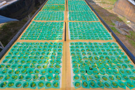 Row of fresh vegetable salad garden plant industry farm in argricuture concept. Hydroponic natural food. Crops Banco de Imagens - 160981838