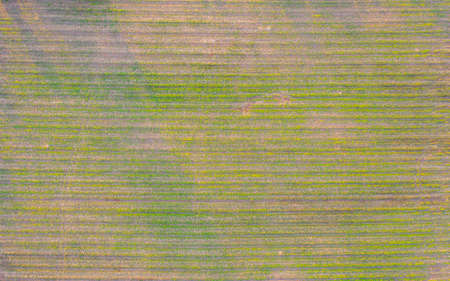Aerial top view of grass and crops field with green mountain hill in agriculture concept. Nature landscape background in Thailand. Banco de Imagens - 161306719
