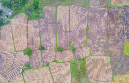 Aerial top view of paddy rice, green agricultural fields in countryside or rural area. Grain for harvest in Asia. Nature landscape background.