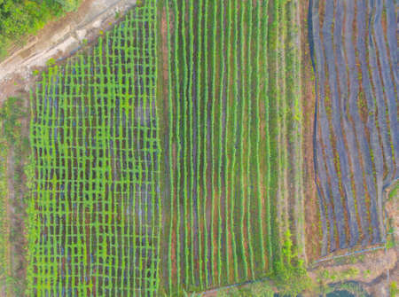 Aerial top view of grass and crops field with green mountain hill in agriculture concept. Nature landscape background in Thailand. Banco de Imagens - 161306140