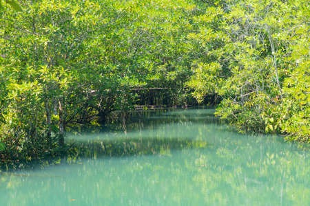 Marine reserve canal, emerald crystal clear lake water surface in National Park with forest trees resource environment, Tha Pom Klong Song Nam, Krabi. Nature landscape. Travel. Underwater in river. Imagens