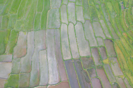 Aerial top view of paddy rice terraces with water reflection, green agricultural fields in countryside, mountain hills valley, Pabongpieng, Chiang Mai, Thailand. Nature landscape. Crops harvest.
