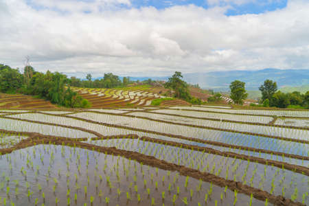 Paddy rice terraces with water reflection, green agricultural fields in countryside, mountain hills valley, Pabongpieng, Chiang Mai, Thailand. Nature landscape. Crops harvest.