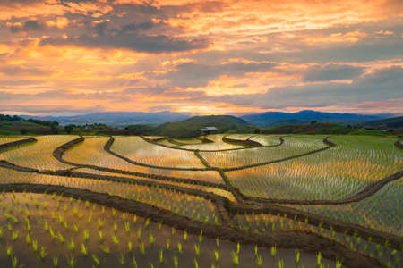 Paddy rice terraces with water reflection, green agricultural fields in countryside, mountain hills valley, Pabongpieng, Chiang Mai, Thailand. Nature landscape at sunset. Crops harvest. Banco de Imagens