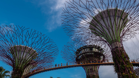 SINGAPORE, DECEMBER 23 2017 : Super-tree park is landmark Singapore at day. cityscape is colorful show to lighting at Marina Bay Sand. Editorial
