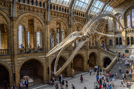 LONDON, UNITED KINGDOM - July 11, 2018 : Model of dinosaur tyrannosaurus Rex and visitors in Natural history museum in London, United Kingdom.