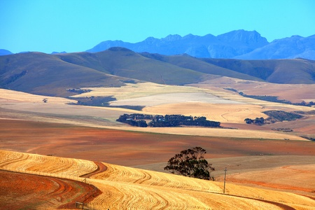 Overberg landscape, South Africa photo