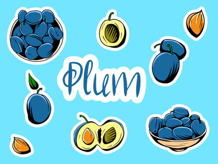 Abstract vector illustration of ripe purple plum fruit with green stem leaf, sliced, background. Set of vector illustrations depicting plums. Stickers.