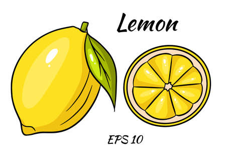 Bright yellow lemon. A whole lemon and a sliced wedge. Drawing for design and decoration.