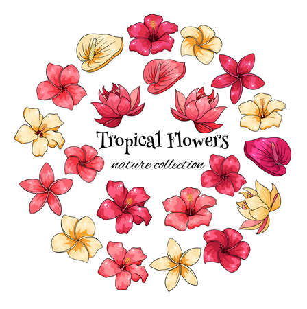 Tropical collection with exotic flowers in cartoon style. Vector illustration for design isolated on white background.