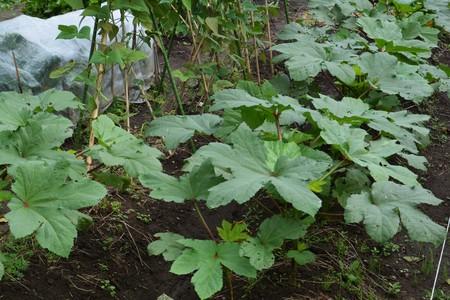 siembra: Home vegetable garden Foto de archivo
