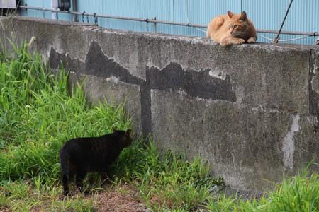 feral: CAT