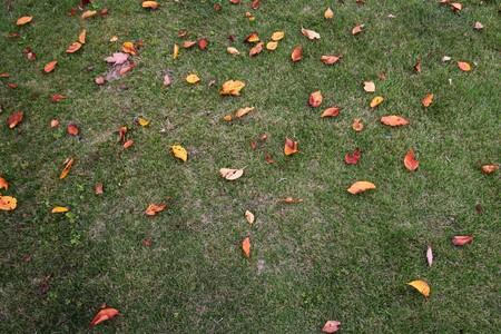 Fall scenery fallen leaves