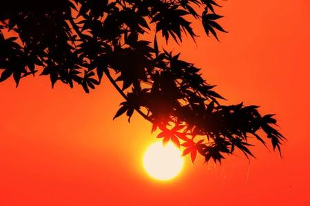 poetic: Sunrise Stock Photo