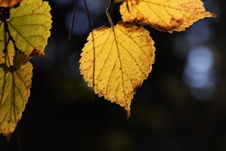 日本: The season of autumn leaves 写真素材