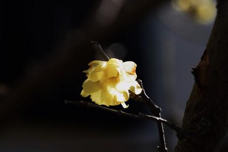 Winter sweet Фото со стока