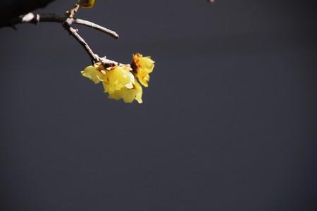 Winter sweet Standard-Bild