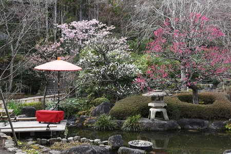 A scene of the Japanese culture, Japanese style garden.