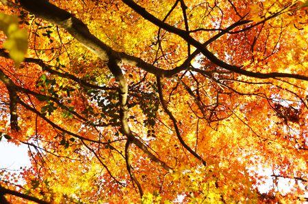 Saison du feuillage d'automne / Fin de l'automne au Japon Banque d'images