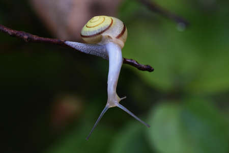 A snail close up image 写真素材 - 154810585