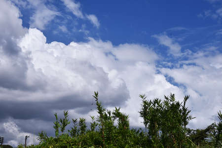 Landscape background material / Collaboration of blue sky, white clouds and natural landscape