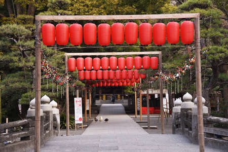 The scene of the precincts of a Japanese shrine. 写真素材