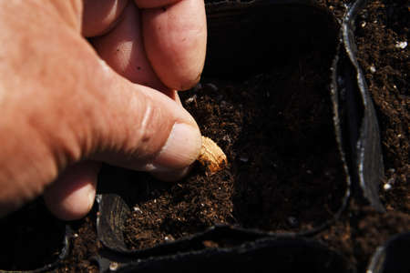 This and that of the work in the vegetable garden. From soil preparation to harvesting.