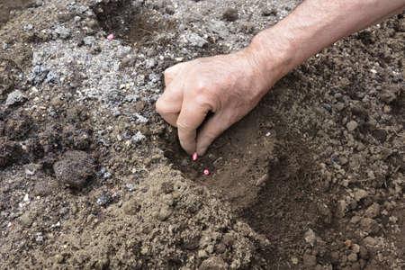 work in the vegetable garden. From soil preparation to harvesting.