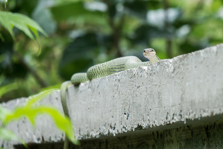 Green snake on the fence