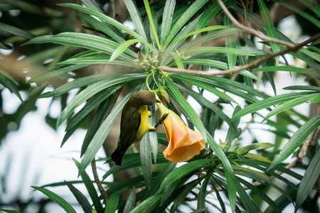 Aves de flores Foto de archivo