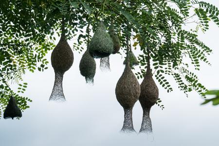 Bird nest Banco de Imagens