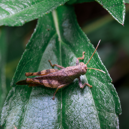 mowers: Grasshopper on leaf