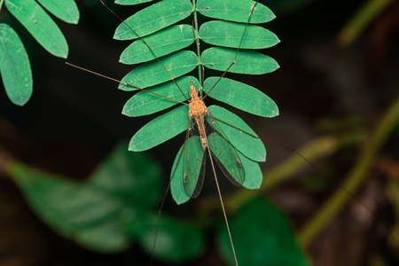 Long legs insect Stock Photo