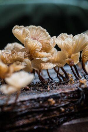 Strange mushrooms Stock Photo