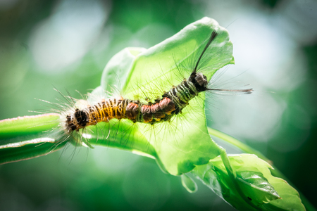 Worm eating leaves Stock Photo