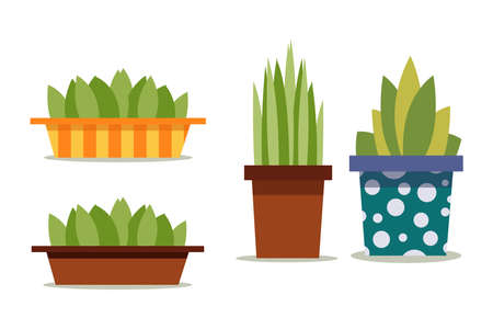 Green plants in the pot with a pattern of polka dots and stripes. Isolated on a white background. In a flat style. Organic decor for the home. Set.