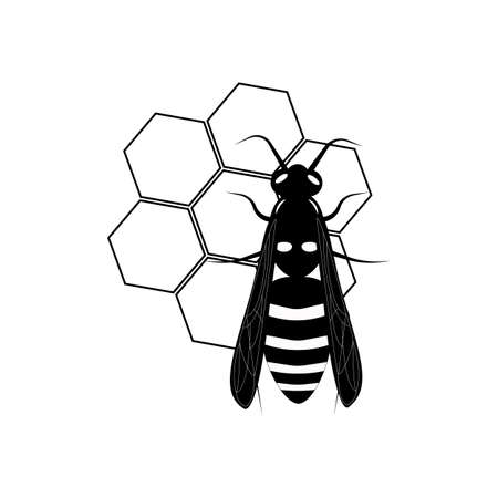Wasp. Honey bee. Botany illustration. Insect animal, exotic. Vector isolated on white backdrop. Honeycomb.