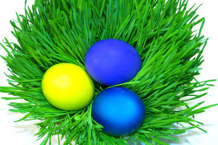 Easter holiday. Color eggs on the grass on white background. photo