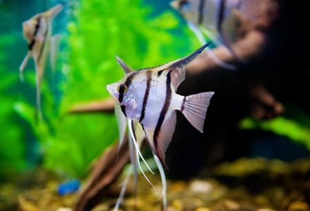 exoticism saltwater fish: Colorful fish in aquarium saltwater world  Stock Photo