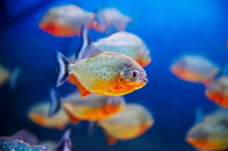 Blue saltwater world in aquarium photo