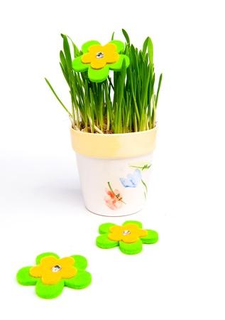 flowerpot with green grass photo